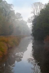CAD29858 - Canale nel Bosco della Mesola