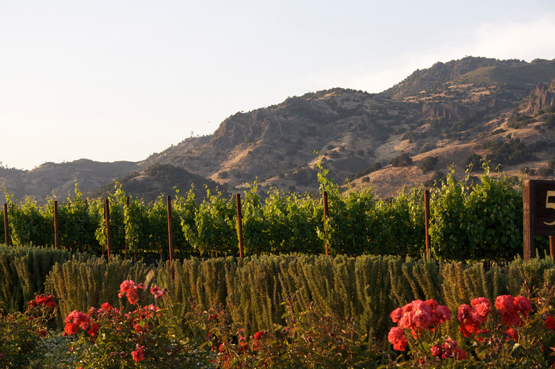 Napa Valley by Roadside