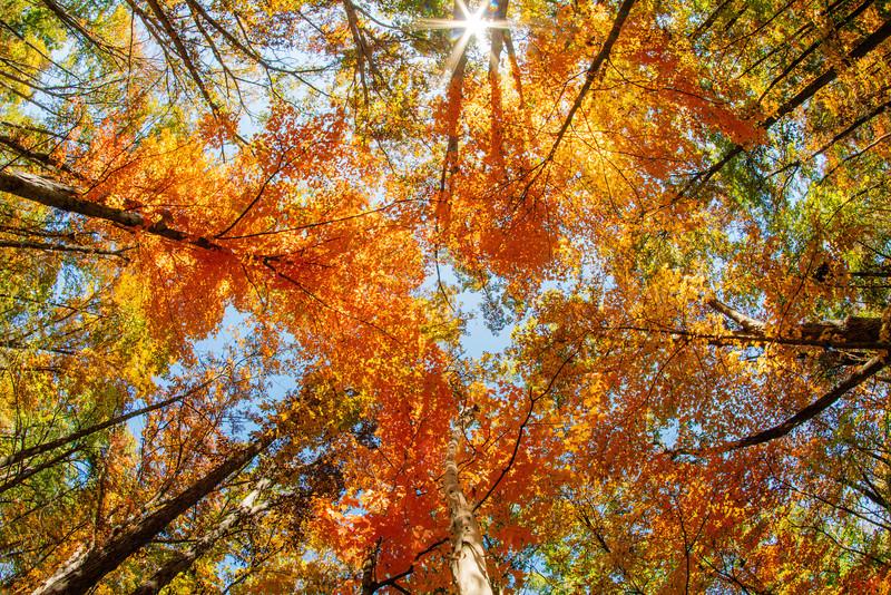 Fall Foliage Fisheye (location undisclosed)