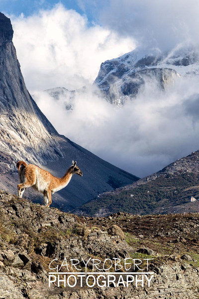 Torres Del Paine_1D-8848-Edit