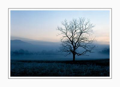 landscapes_tree-2