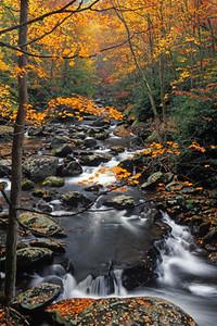 Fall Stream 4