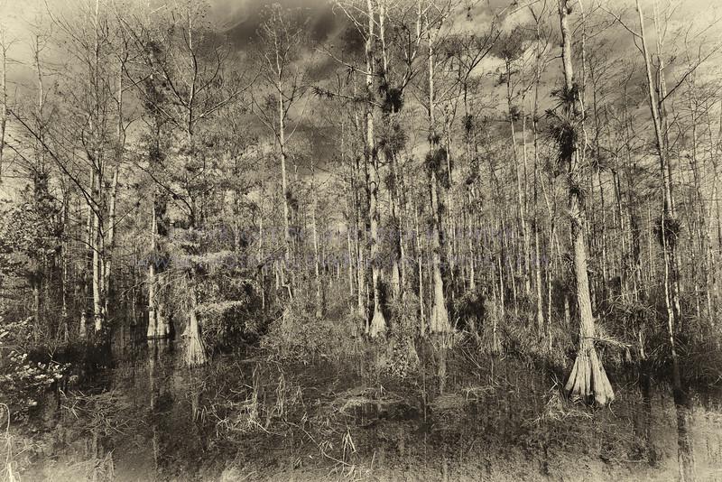 Everglades in B&W