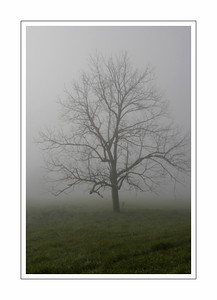 landscapes_Tree-3