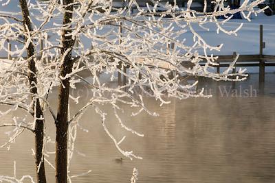 0004-0037 TREE ICE