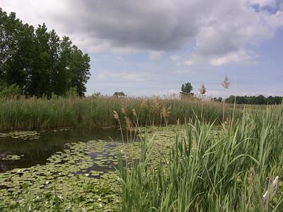 Landscapes, Waterscapes