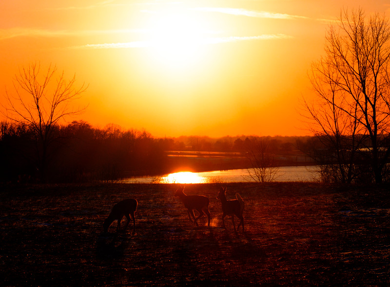 deer backlight 1