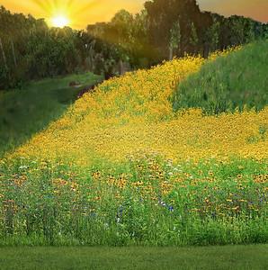 yellow bloom road
