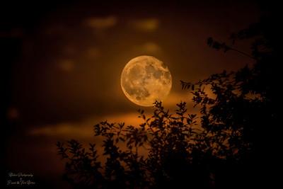 Full Sturgeon Moon TN205764