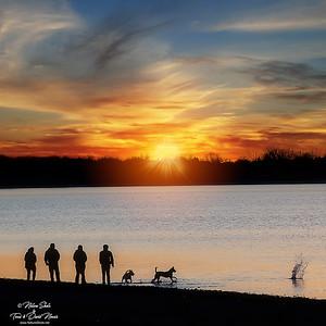 Beach Dogs 074788