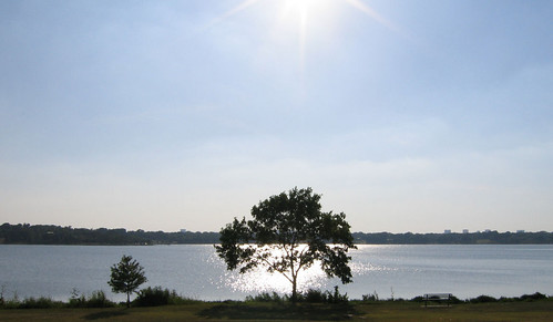 A single tree standing in contrast to the summer sun shining on the lake (145_4515)