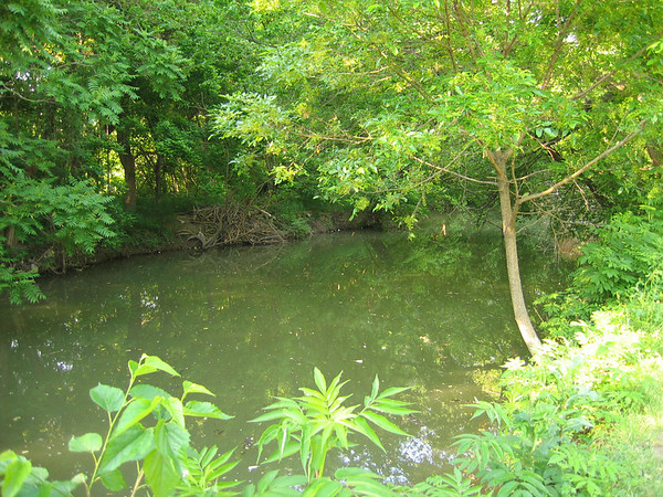 A lush and verdant area surrounding one of the local creeks (187_8713)