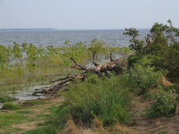 A fallen tree on a peninsula at Lake Tawakoni