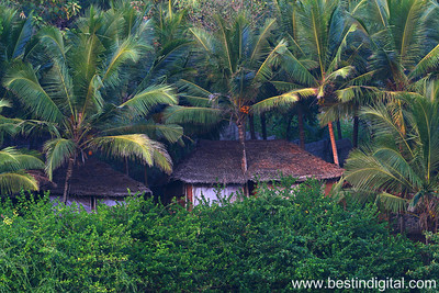 Huts among Coconut Palms, Puvar Beach, Trivandrum, Kerala, India, 2009