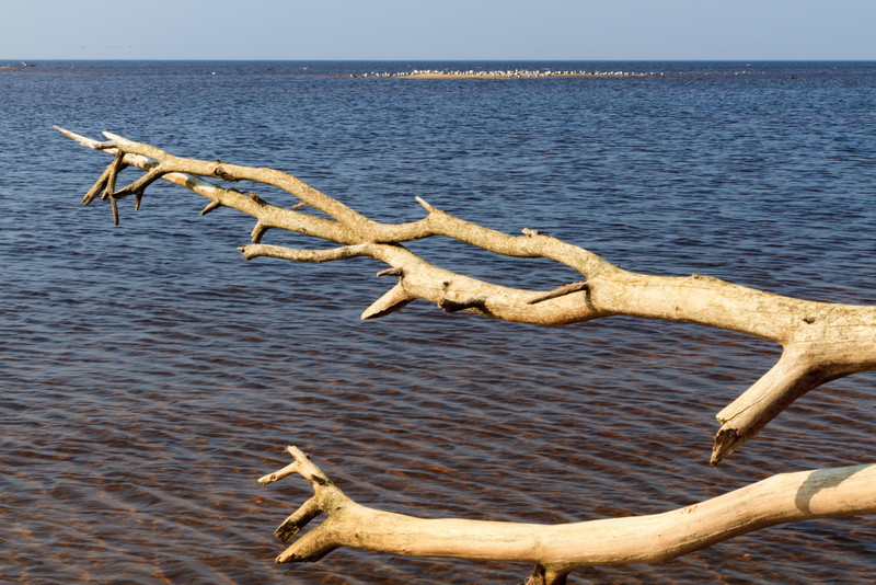 Baltic_Sea_Riga_Gulf_River_Gauja_MG_9969-048