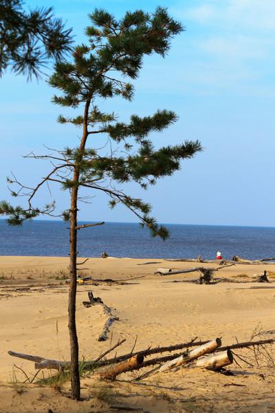 Baltic_Sea_Riga_Gulf_River_Gauja_MG_9857-024