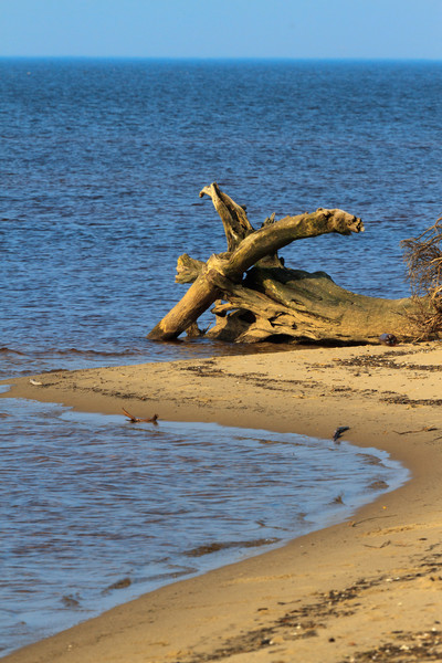 Baltic_Sea_Riga_Gulf_River_Gauja_MG_0043-064