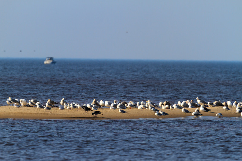 Baltic_Sea_Riga_Gulf_River_Gauja_MG_0009-057