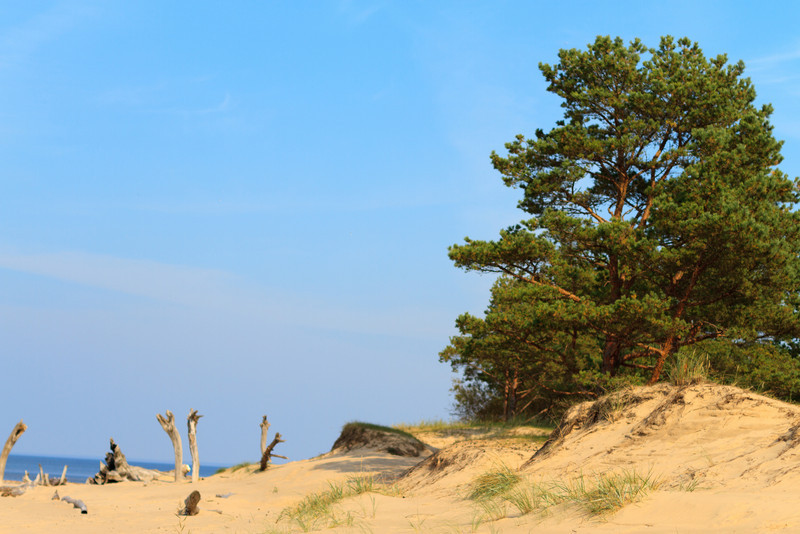 Baltic_Sea_Riga_Gulf_River_Gauja_MG_9866-026