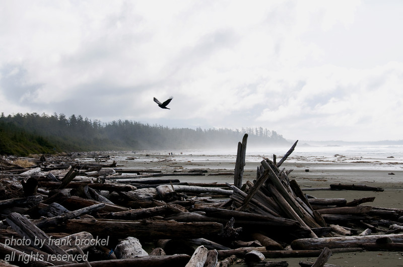Driftwood and ocean at Long Beach near Tofino, Vancouver Island