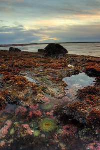 © Joseph Dougherty. All rights reserved.   Tidepools at sunset on the California coast.