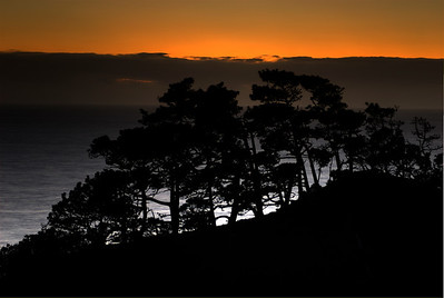 © Joseph Dougherty. All rights reserved.   Trees in silouette at sunset north of Point Arena; Mendocino County, California.