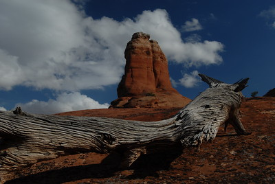 © Joseph Dougherty.  All rights reserved.   Old weathered wood and sandstone formation; Arches National Park, Utah.
