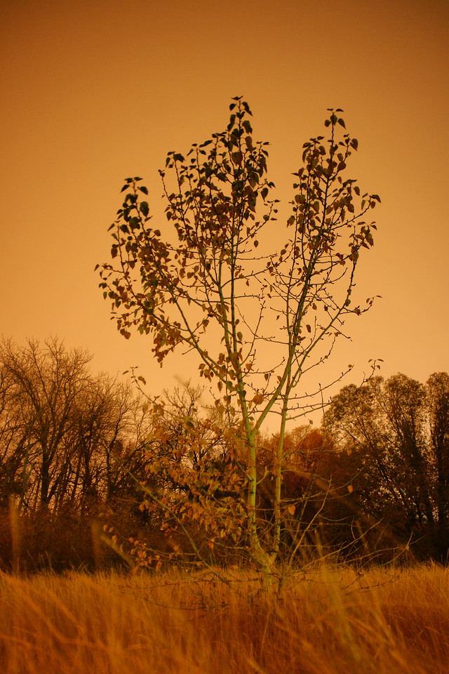 Aspen tree, light by reflected city lights on an overcast night.  Bozeman, MT<br /> <br /> © Kirk Sagers