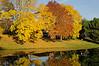 Colorful trees on Milwaukee Avenue, Buffalo Grove, Illinois, USA