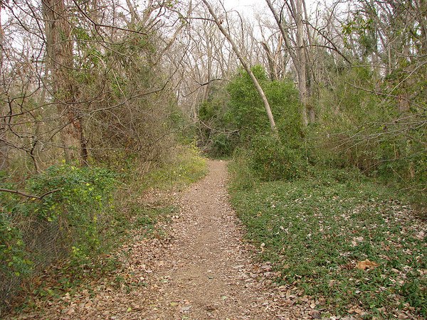A trail at the Old Fish Hatchery Nature Area at White Rock Lake in Dallas (IMG_20080105_00765)