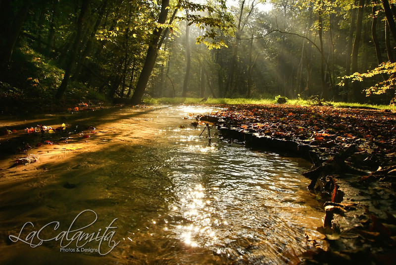 Fog over the stream in the autumn forest