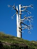 A wonderful ancient Ponderosa pine that was split by lightning.  It is part of a wind-swept trio along a ridge.