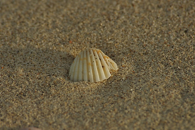 Shell on the Sea Shore