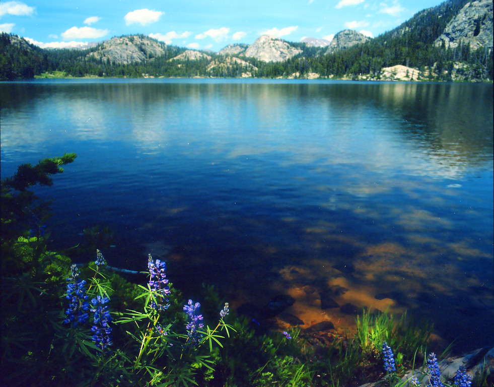 Lupine along the shore of Trapper Lake in the Wind River Range.  Bridger Teton Wilderness, WY<br /> <br /> © Kirk Sagers