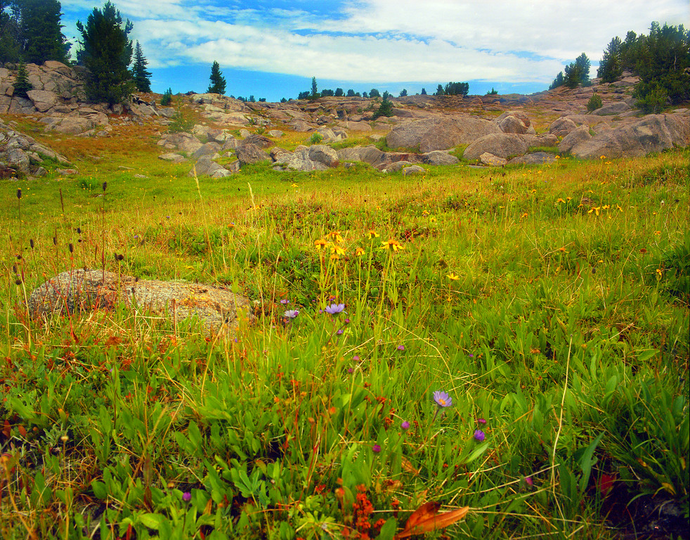 Wildflowers bloom in a high rocky meadow near Double Top Peak in the Wind River Range.  Bridger Teton Wilderness, WY<br /> <br /> © Kirk Sagers