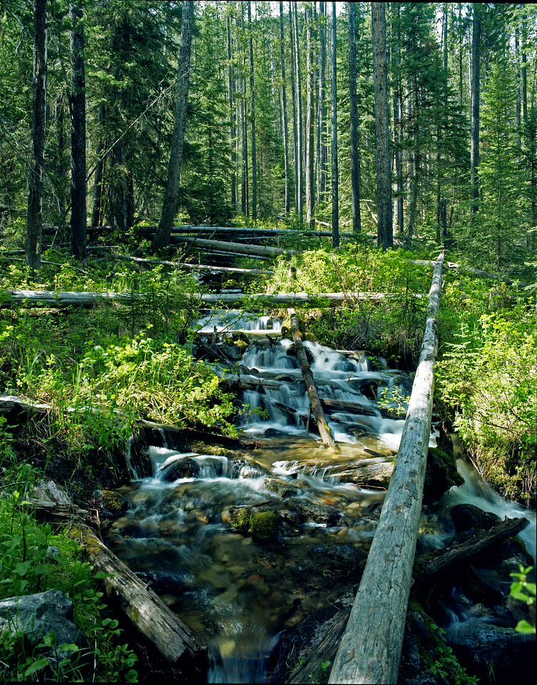 Lava Creek, Gallatin National Forest, MT<br /> <br /> © Kirk Sagers