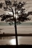 Lone tree hides the setting sun.