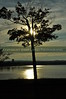 Color image fo a lone tree silhouetting the lake at sunset.