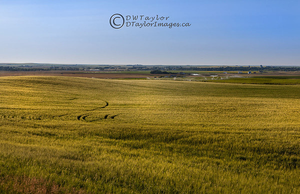 Farmland south of Lethbridge, Alberta, Canada