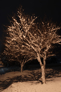 © Joseph Dougherty. All rights reserved.   Snow-coated trees line a city street, illuminated by street lamp.
