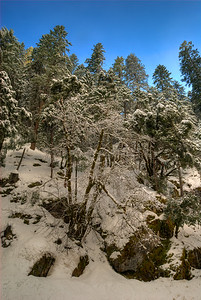 © Joseph Dougherty. All rights reserved.   Trees crusted in snow; Sierra Nevada range; El Dorado County, CA.