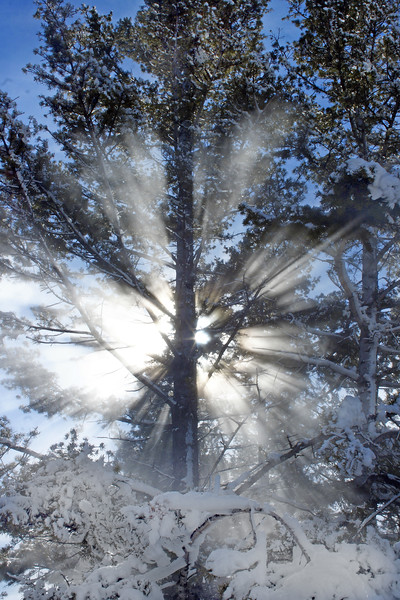 Sunburst through the steam, Mammoth Hot Springs, Yellowstone NP, WY<br /> <br /> © Kirk Sagers