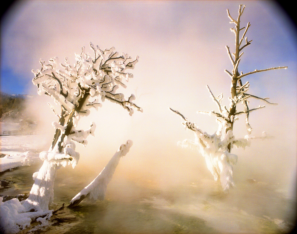 Frozen trees in a hot pot, Mammoth Hot Springs, Yellowstone NP, WY<br /> <br /> © Kirk Sagers
