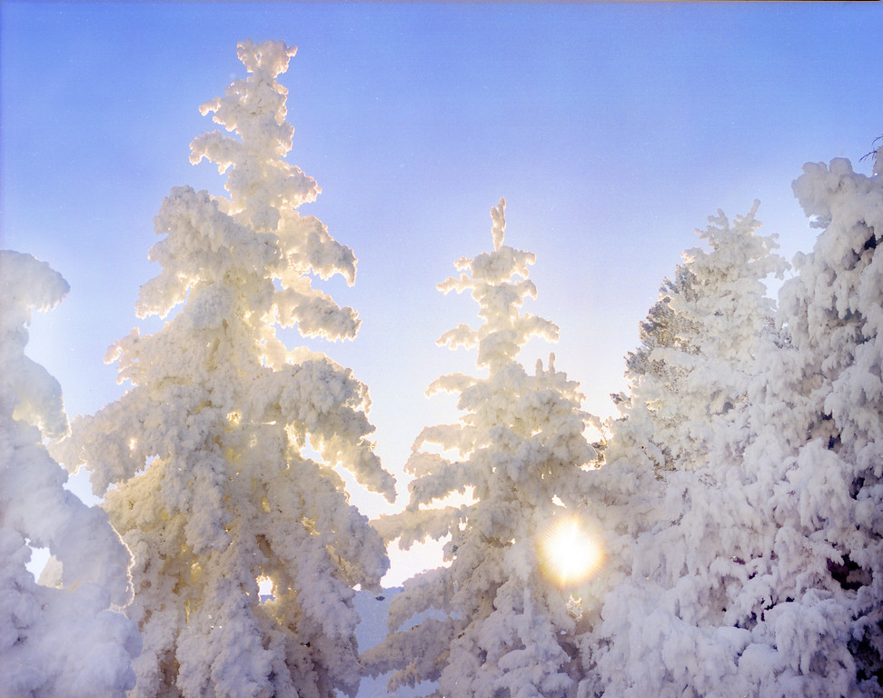 Fir and Pine trees covered in frost from the steam rising off Mammoth Hot Springs.  Yellowstone NP, WY<br /> <br /> © Kirk Sagers