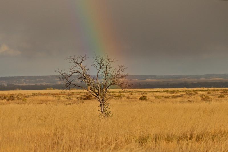 Russian Olive Rainbow.