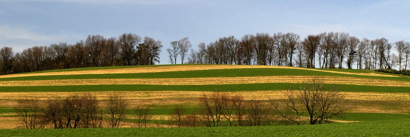 Striped Farmland
