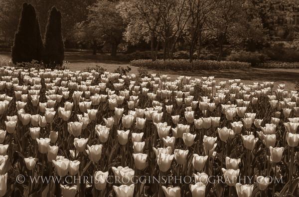 Sherwood Gardens 3