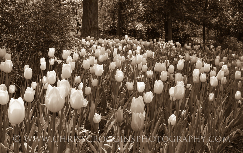 Sherwood Gardens 2