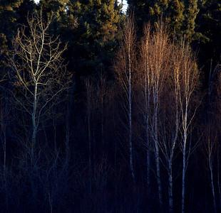 The Aspen Parkland