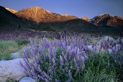 Harmony 2 Eastern Sierra, California